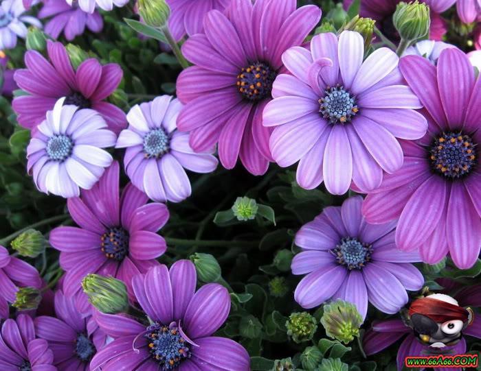 مجموعة زهور لعيونكم domain-35e92cf3c0.jp