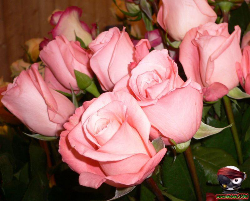 مجموعة زهور لعيونكم domain-6891020db0.jp