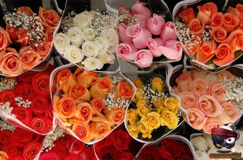 مجموعة زهور لعيونكم domain-daee0cf701.jp