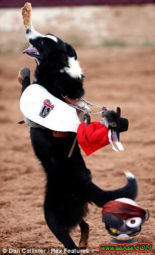 صور صداقة قوية بين قرد و كلب 66a66.com-43a72f67c2