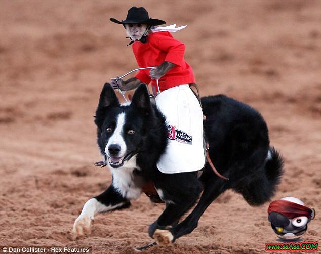 صور صداقة قوية بين قرد و كلب 66a66.com-f67454f331