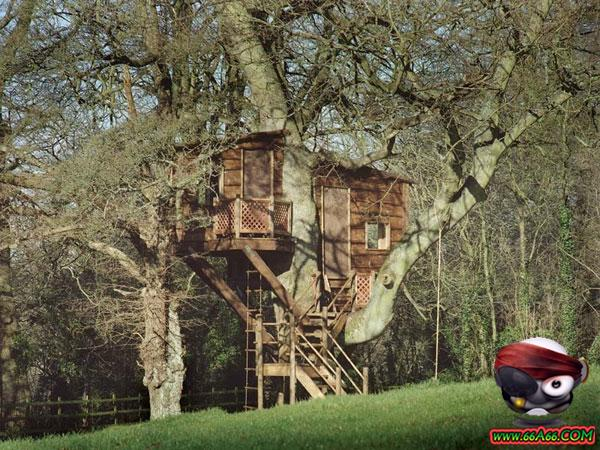 بيوت خشبية على الشجر