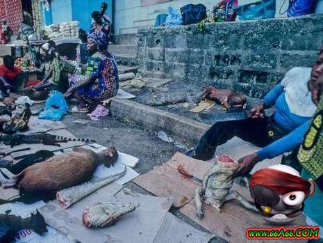 تعذيب الحيوانات افريقيا