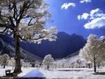 جمال الثلج على الاشجار